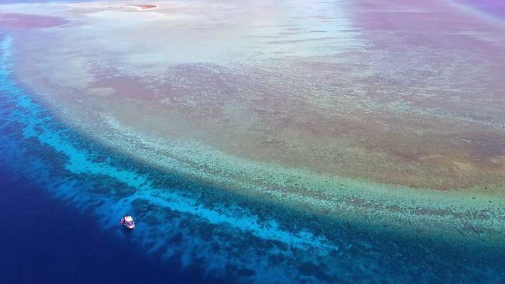 Explorez l'un des récifs coralliens les plus préservés de la planète