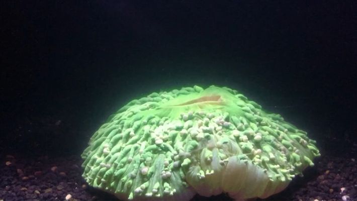 Le réchauffement des océans provoque le blanchiment du corail
