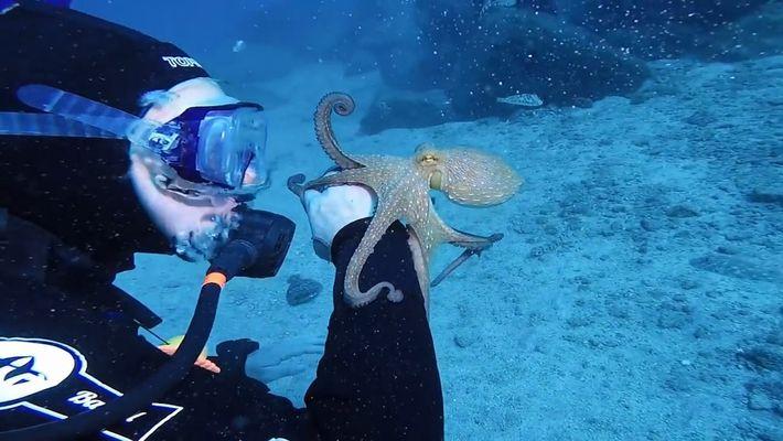 Une petite pieuvre se pose sur le bras d'une plongeuse