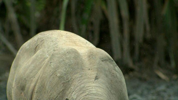 Reconnaissez-vous cet animal ?