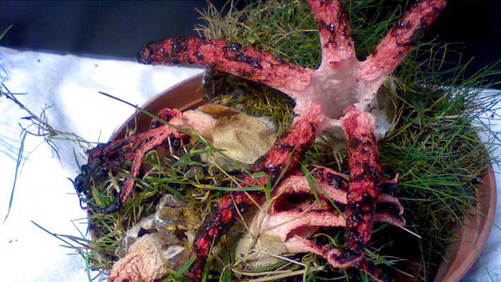 Un étrange champignon étend ses'tentacules