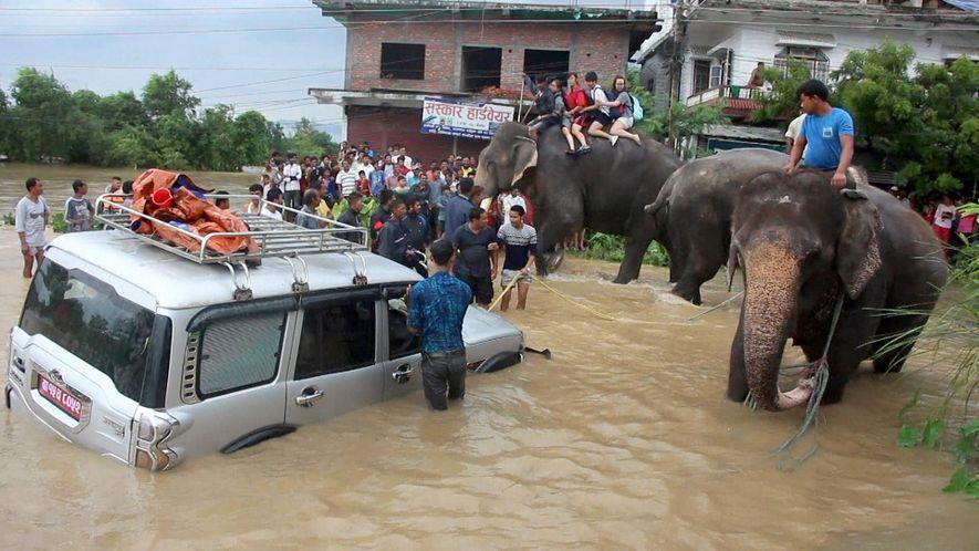 Des éléphants sauvent des centaines de touristes emportés par les flots