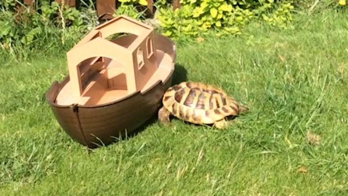 Pourquoi Timmy la tortue attaque tout ce qui bouge