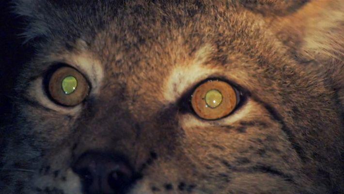 Tout ce qu'il y a à savoir sur la vision nocturne des animaux
