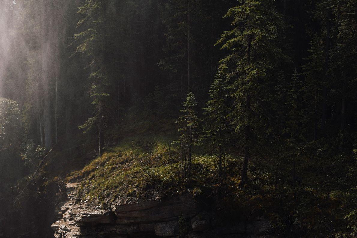 La brume des chutes Athabasca brille à la lumière du soleil qui traverse la forêt du ...
