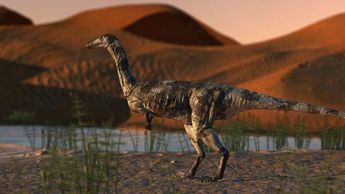 Un fossile de théropode exceptionnellement bien conservé mis au jour au Brésil