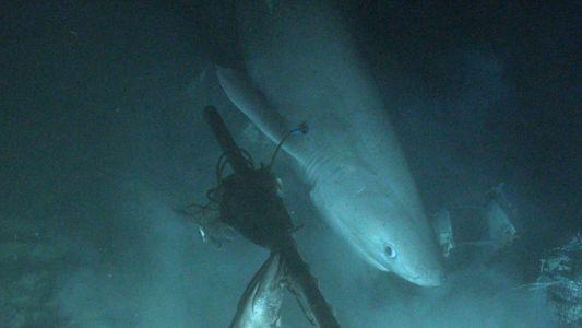 Inédit : un sous-marin a réussi à placer une balise sur un requin pour la première ...