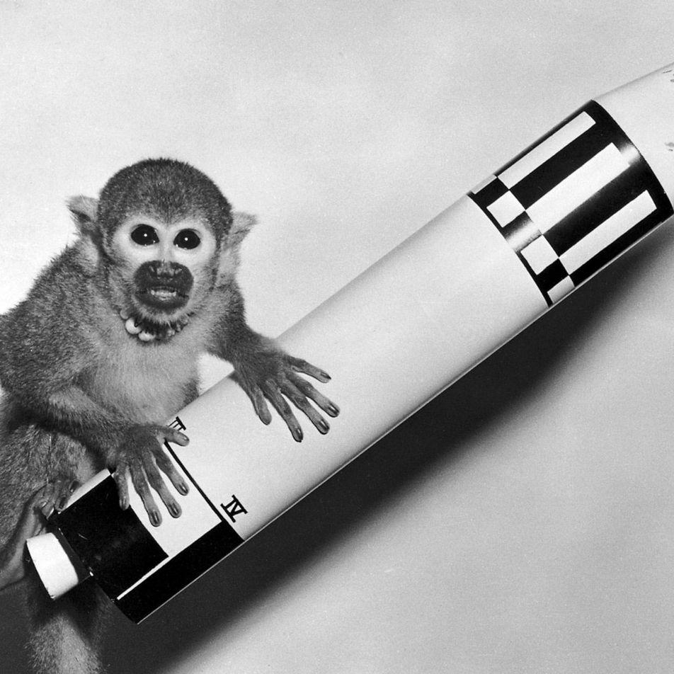 La conquête spatiale n'aurait pas été possible sans ces animaux