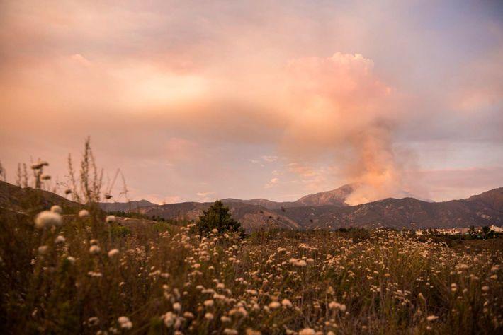 Dans la forêt nationale de San Bernardino, l'incendie Valley fait rage à proximité de Forest Falls ...