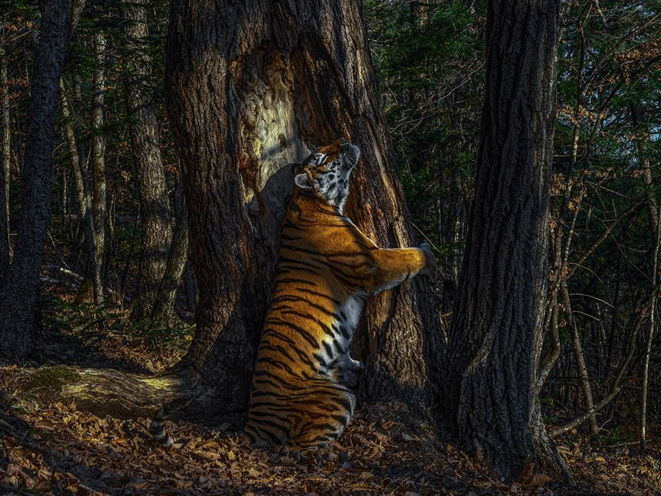 Et les meilleurs photographes animaliers de l'année 2020 sont...
