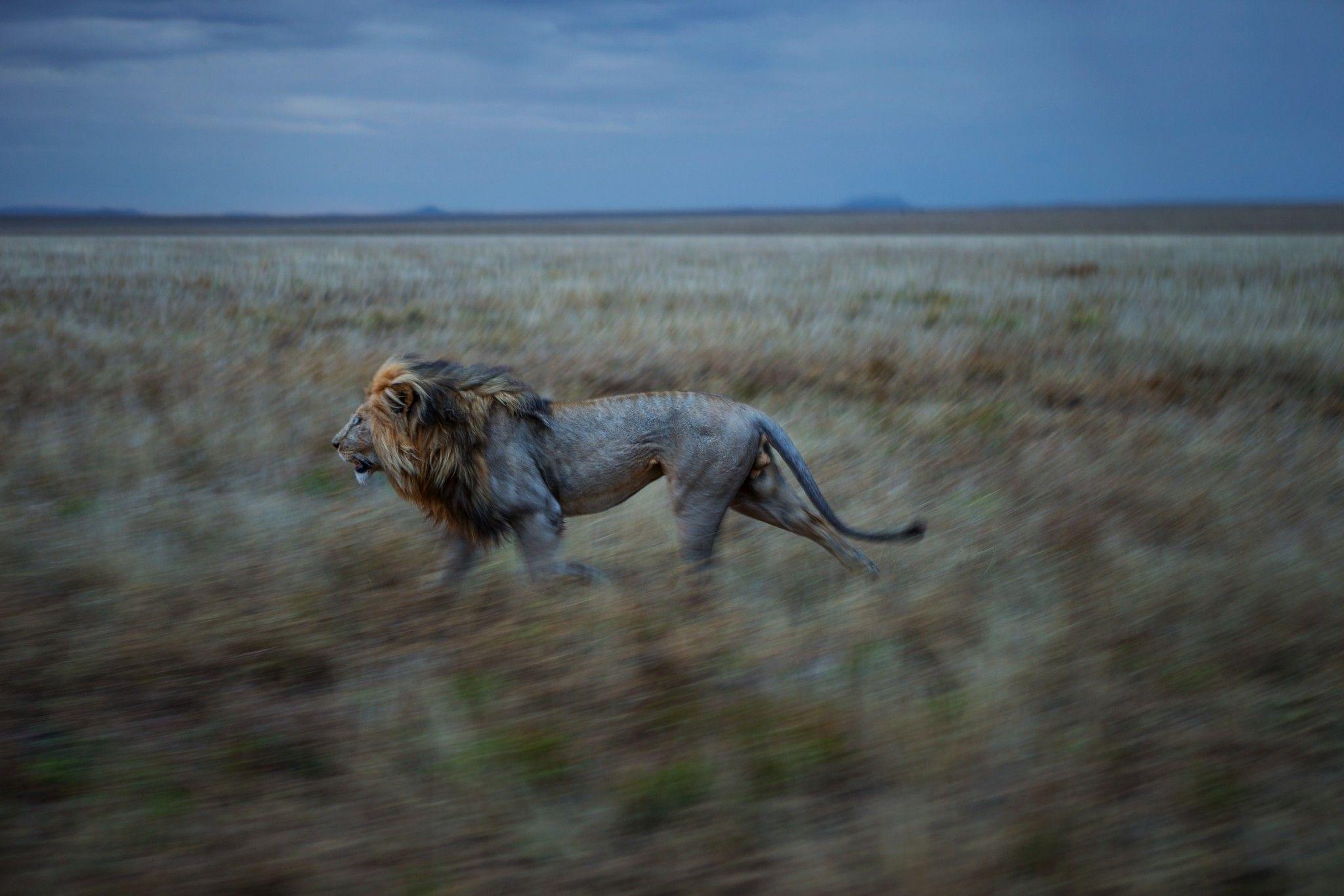 La sixième extinction de masse des animaux a déjà commencé