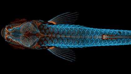 Découvrez les plus belles photos du monde microscopique de l'année 2020