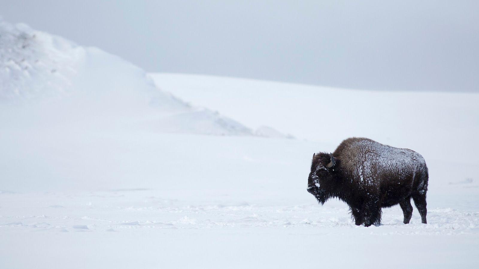 Des prises de vue magnifiques et des expériences immersives dans huit des parcs nationaux préférés des ...