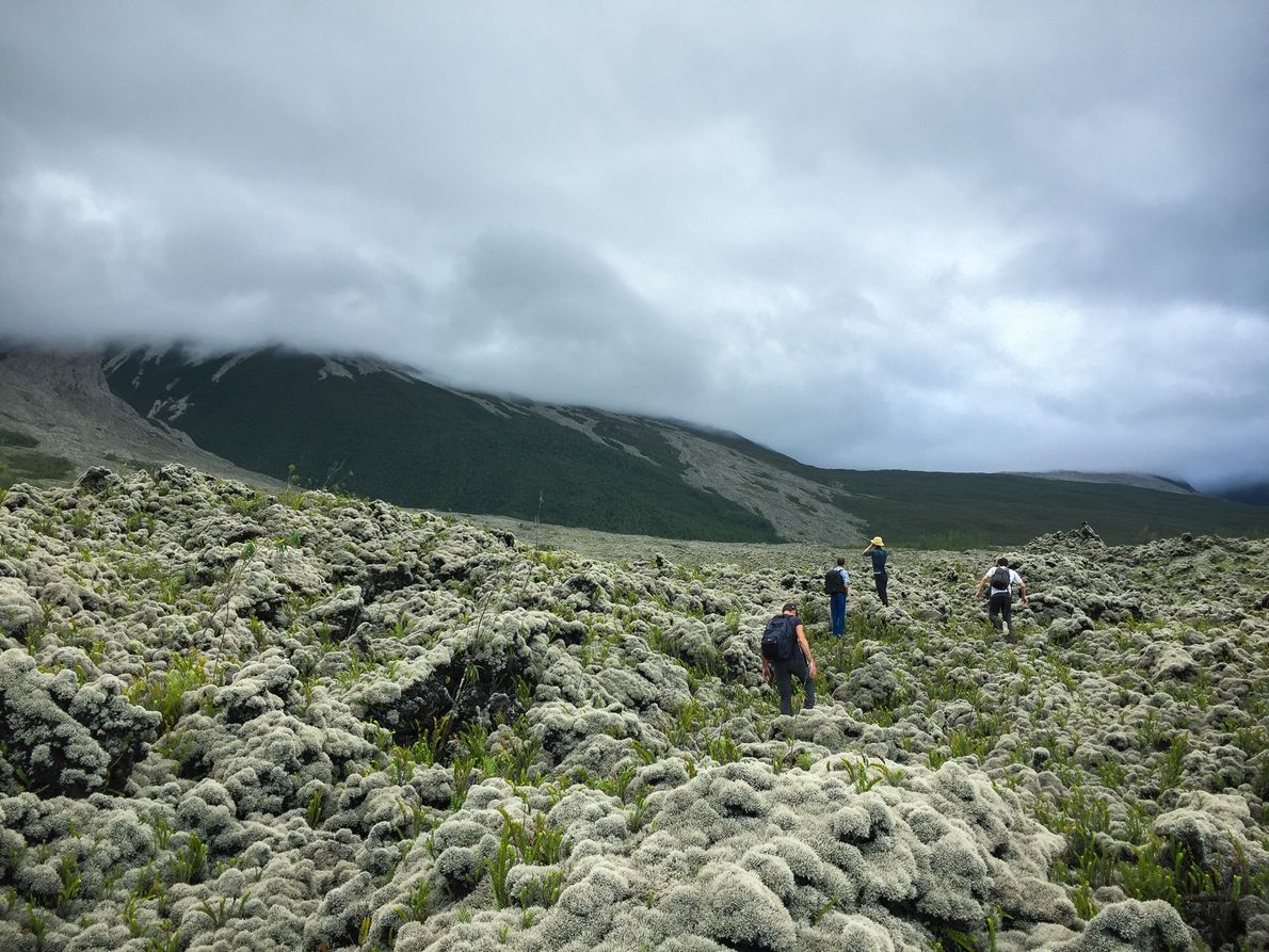 Atteindre la forêt sur le versant du volcan prend cinq heures de marche, pour quelques kilomètres ...