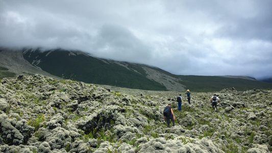 À la Réunion, ces explorateurs surveillent les forêts à leurs risques et périls