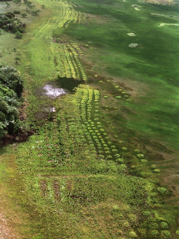 Champs surélevés précolombiens de la plaine côtière de Guyane française.