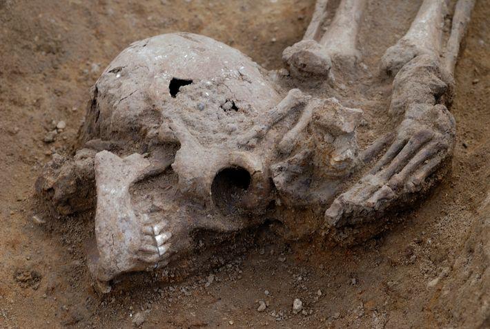 Knobb's farm. Détail du crâne. On peut voir qu'il a été placé sous le pied droit, ...