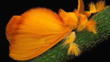 Pourquoi certains insectes sont-ils si attirés par la lumière ?