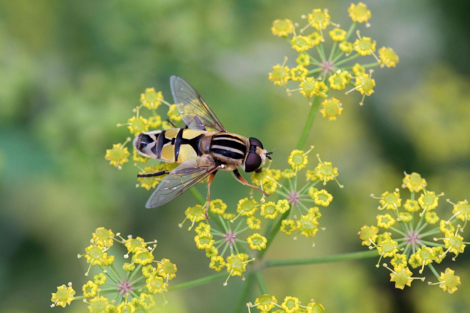 Comment sauver les insectes pollinisateurs depuis votre balcon ou votre jardin ?