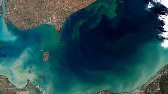 Le lac Érié en octobre 2011, pendant une intense floraison d'algues bleues (cyanobactéries).