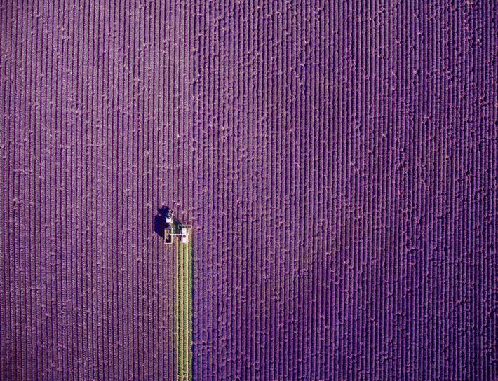 1er Prix Nature : Provence, travaux d'été, de jcourtial