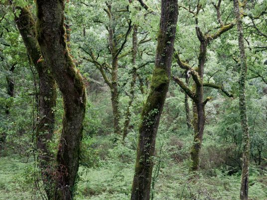 L'exploitation des forêts européennes a augmenté de 49% en quelques années