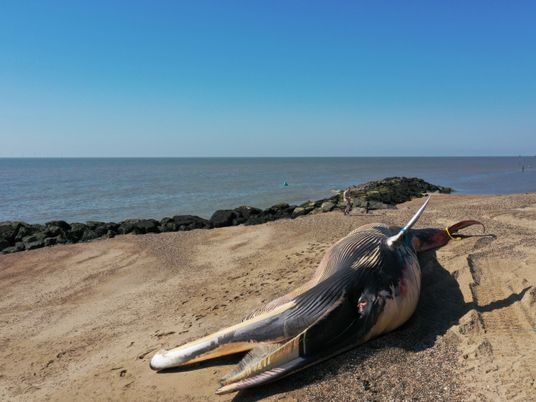 Pourquoi les cétacés s'échouent-ils sur les plages ?