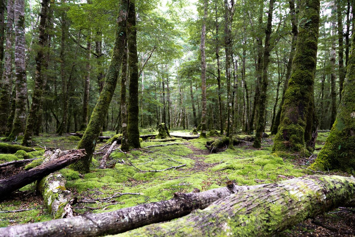 2015 - Paysage - Kepler Green Forest Boitier : Canon 6D Objectif : Canon 24-105/f4 L IS USM Infos ...