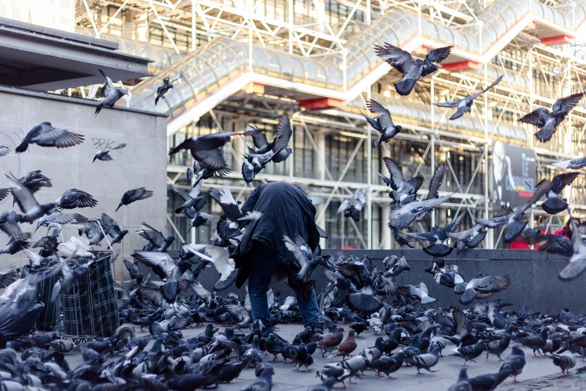 2016 - Urbain - Pigeons parisiens Boitier : Canon 6D Objectif : 50mm/f1,8 Infos : ISO 100, 50mm, f1,8, ...