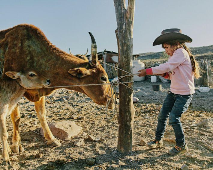 Guadalupe, la fille d'Eleonary Arce Aguilar, s'apprête à traire des vaches au Rancho Mesa San Esteban situé dans la Sierra ...