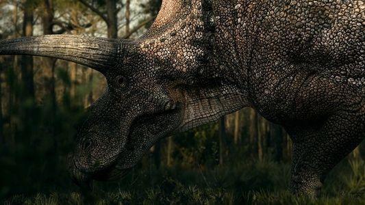 Découverte d'un rare fossile de tricératops