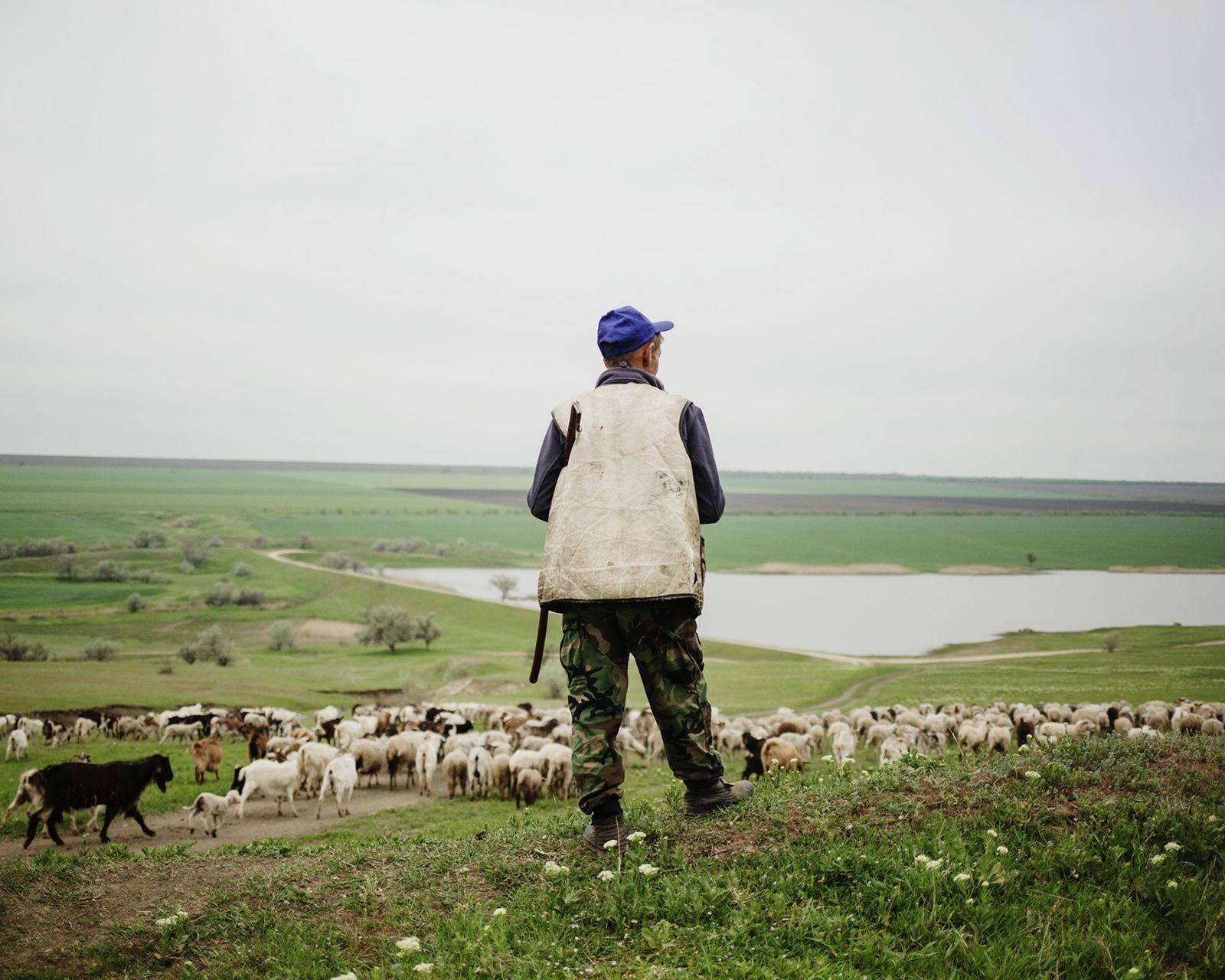Près d'un lac, un berger veille sur ses moutons.