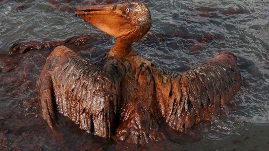 Environnement : 220 tonnes de pétrole déversées dans le port de Rotterdam