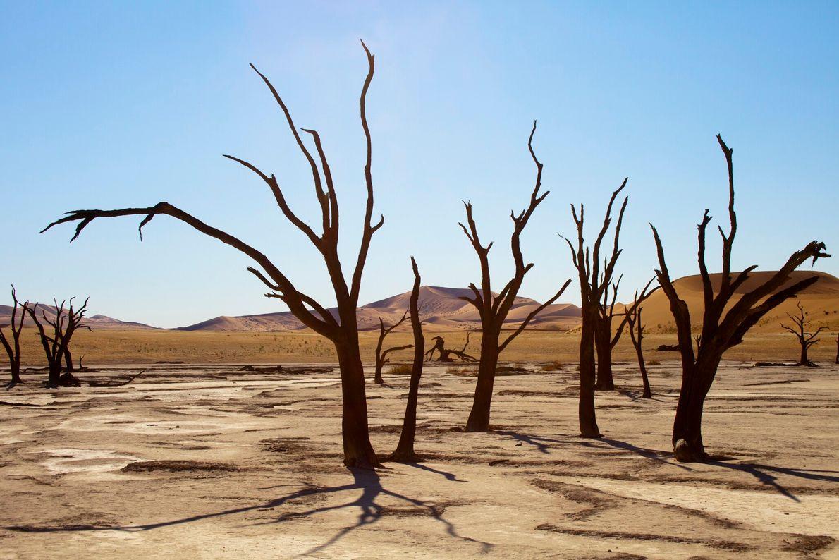 En Namibie, Deadvlei est un ancien marais asséché à la beauté désolée où se dressent des ...