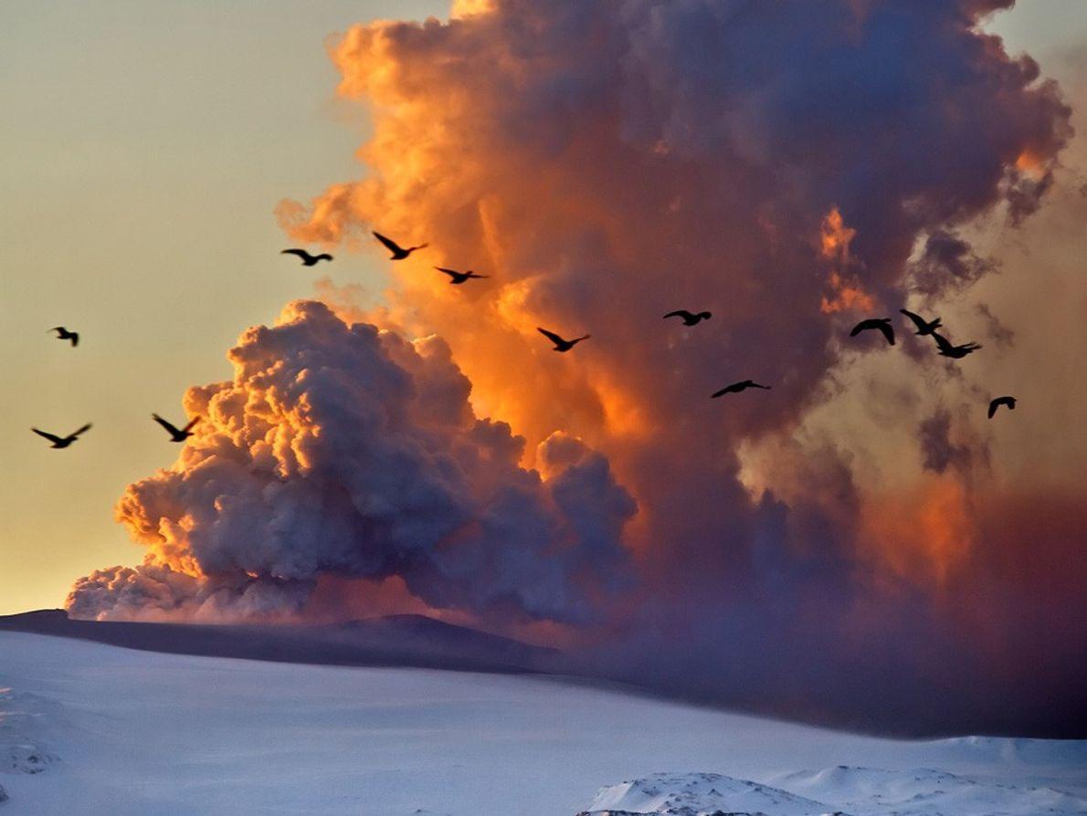 Des oies survolent le nuage de cendres produire par le volcan Eyjafjallajökull en avril 2010. Les ...