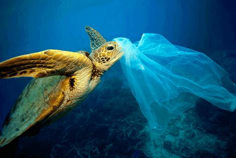 L'Union Européenne interdit le plastique à usage unique dès 2021