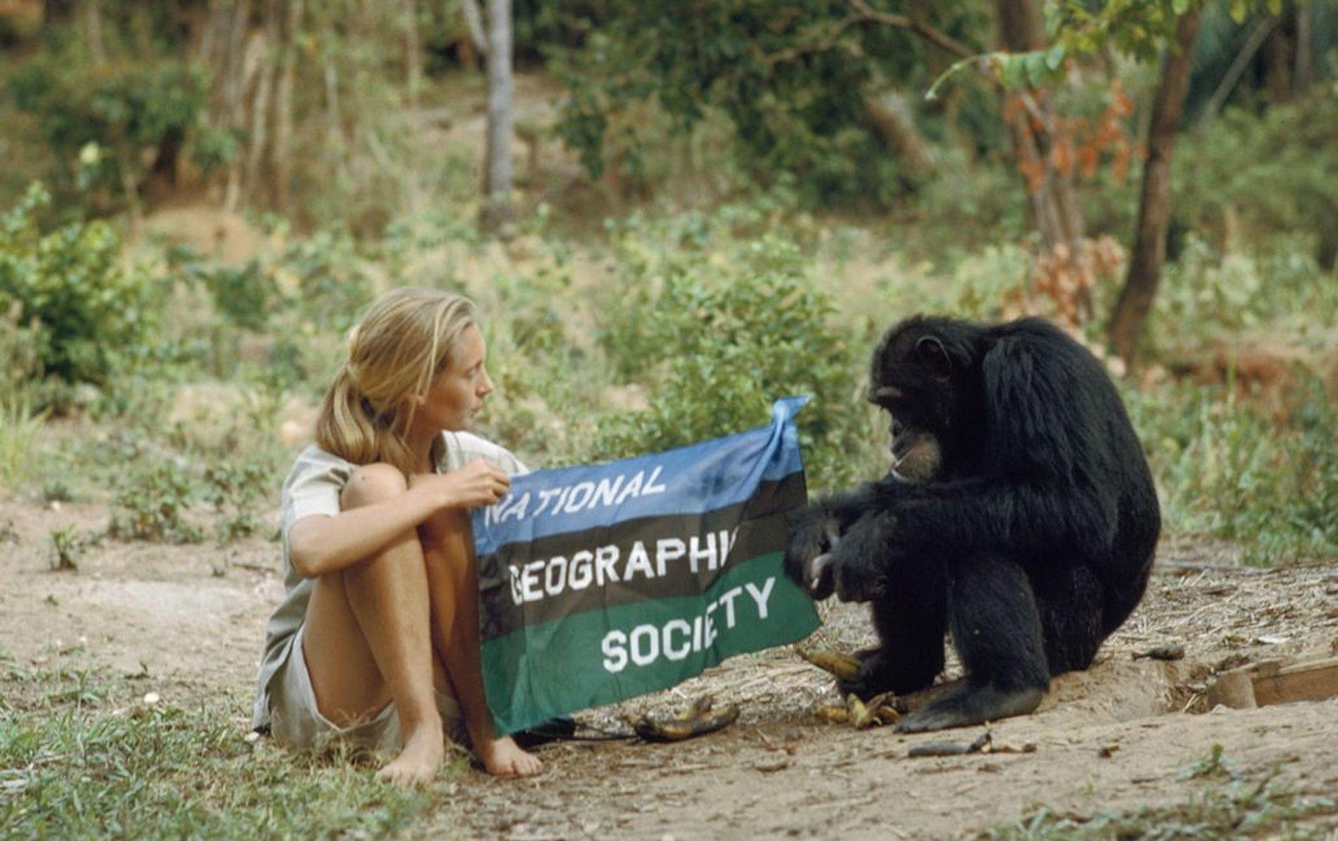 Jane Goodall et un jeune compagnon présentent le drapeau de la National Geographic Society en 1962. ...