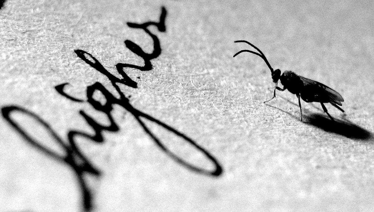 Insecte sur du papier