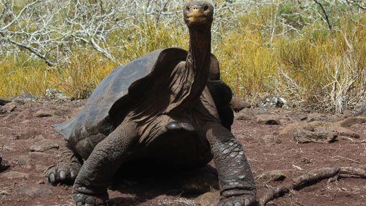 La folle libido de cette tortue a sauvé son espèce