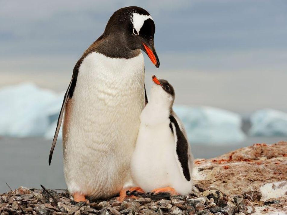 Les plus beaux oiseaux du monde en images