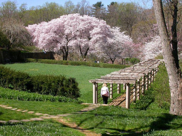 Les jardins de Dumbarton Oaks.