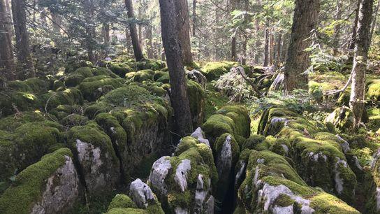 L'essentiel de la reconquête forestière en Europe relève de la recolonisation spontanée sur les terres ingrates ...