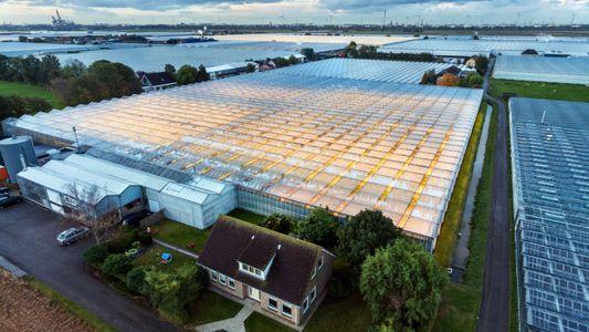 Les Pays-Bas, centre de toutes les innovations agricoles