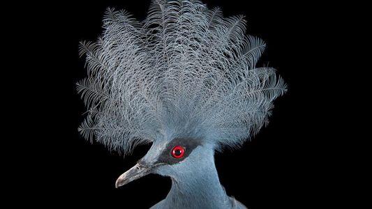 L'incroyable intelligence des oiseaux