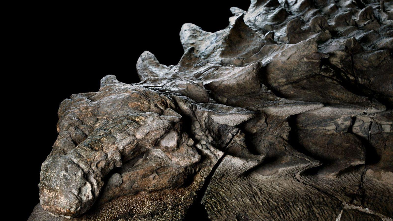 Il y a environ 110 millions d'années, cet herbivore cuirassé s'est frayé un chemin jusqu'à ce ...