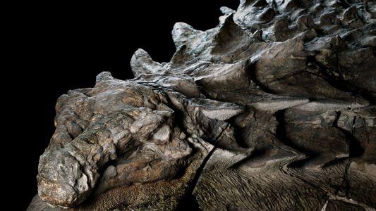 Une nouvelle espèce de dinosaure cuirassé a été mise au jour