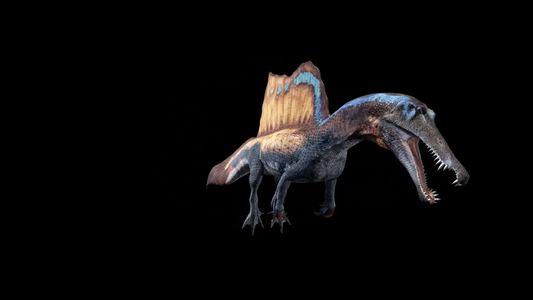 Modélisation 3D du Spinosaurus