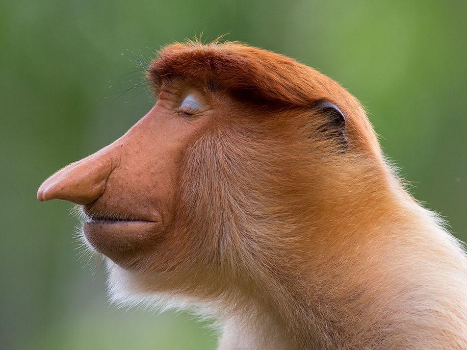 Les plus belles photos d'animaux sauvages de 2020