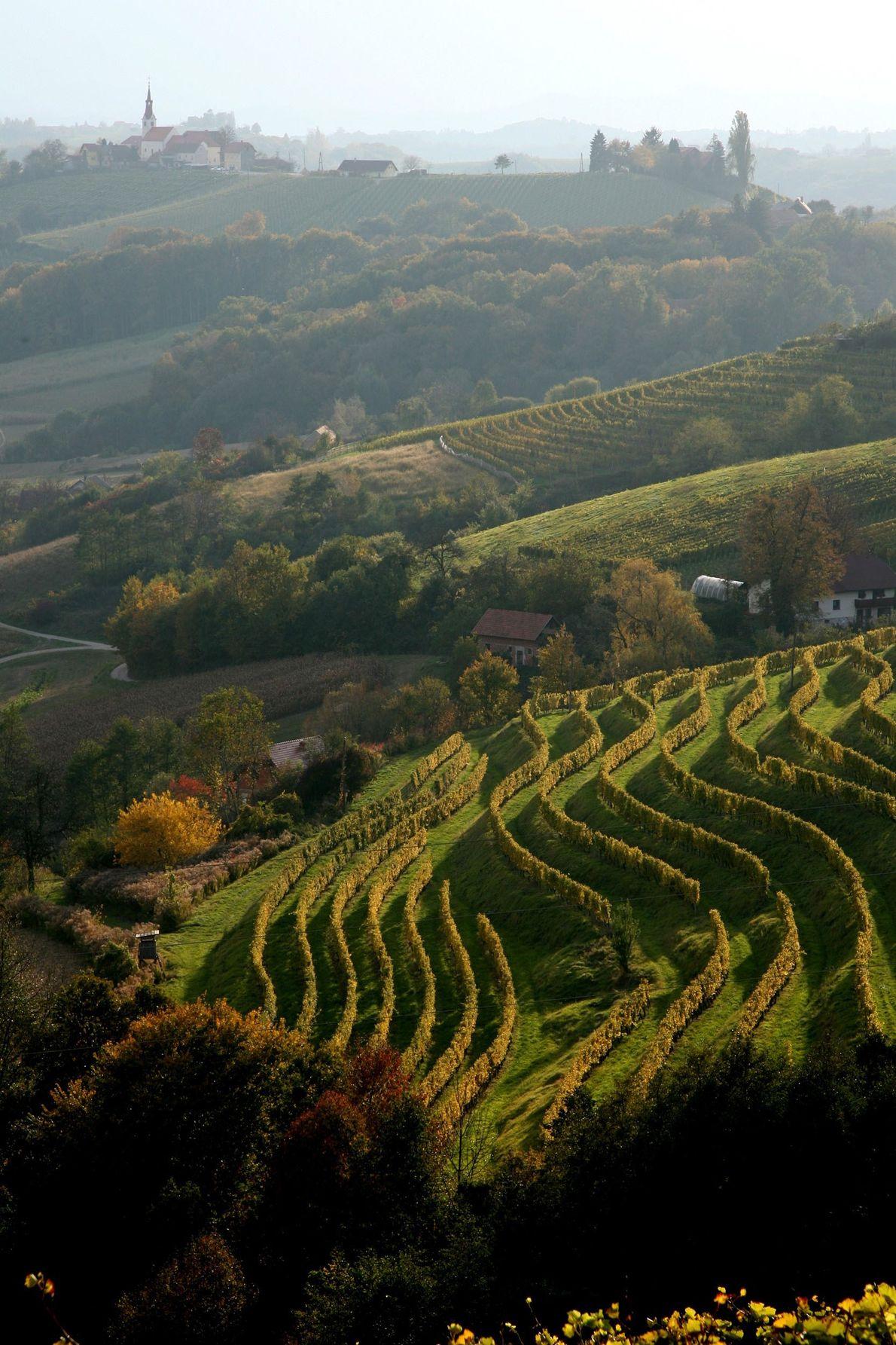 Vue sur les collines environnantes de Jeruzalem, située dans les collines slovènes, au nord-est du pays. ...