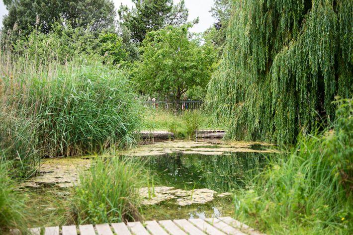 Plan nature de la Métropole Grand Lyon : l'îloz' dans le Parc de Miribel Jonage à Meyzieu.